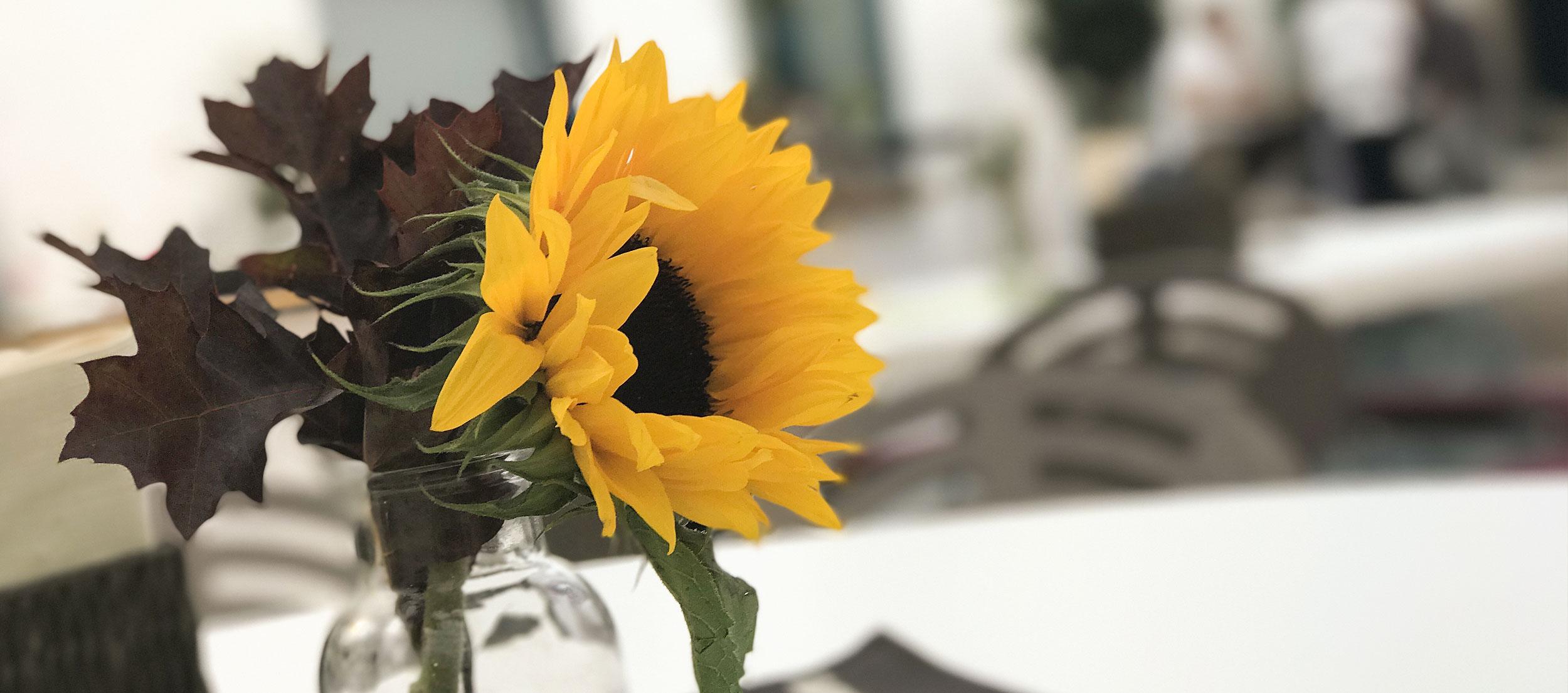 Sonnenblume in der Genuss FABRIK